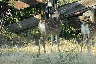 South Texas Hunting Ranches